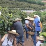 Pisa da Uva da Quinta do Olivardo encanta pela originalidade e atrai pela sinceridade