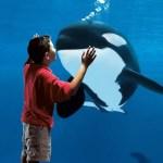 SeaWorld Parks & Entertainment lança novos ingressos para os parques da Flórida