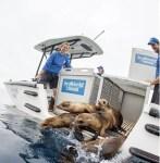 SeaWorld Rescue afirma que ameaças à fauna marinha estão aumentando