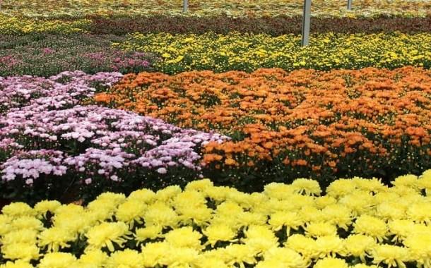Primavera: mercado de flores do Brasil comemora chegada da estação com previsão de 7% de crescimento