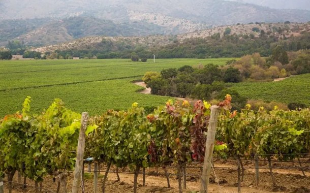 Um roteiro harmonizado com vinho e verde pelo Chile