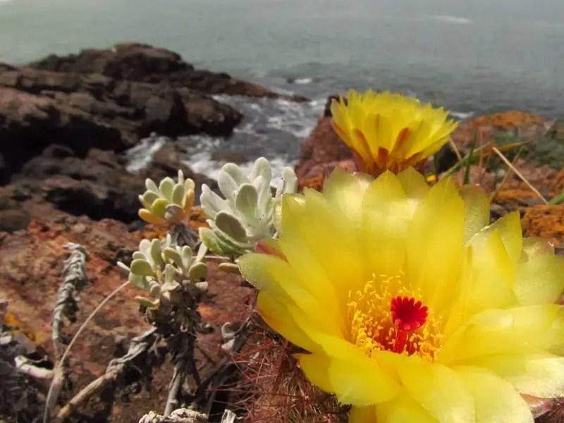 Uruguai apresenta uma infinidade de atrações aos turistas durante a primavera
