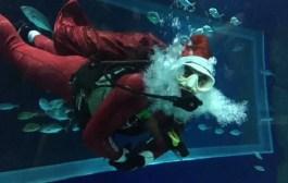 Programação de férias do AquaRio tem mergulho do Papai Noel