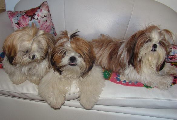 Donna (la mamá) con sus  cachorros Rocco y Gigi.
