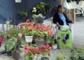 Adornar con flores naturales navideñas será un lujo este año.