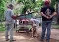 Ejercicios de arrastre ayudan a los perros a drenar las energías