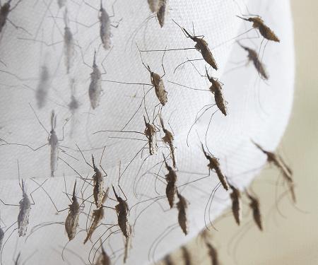 Bayer se unió al programa 'ZERO by 40' para mitigar la malaria