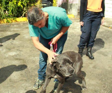 """Programa """"Carrizal y sus Huellas"""" suma a voluntarios para la protección animal"""