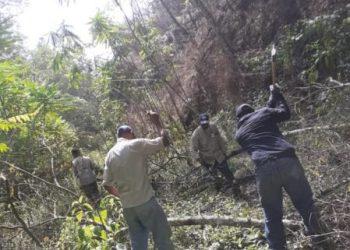Cuadrillas de mantenimiento realizaron remoción de vegetación en líneas eléctricas