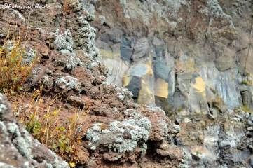 natura-sul-vulcano-vesuvio