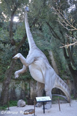 diplodoco dinosauri in carne e ossa