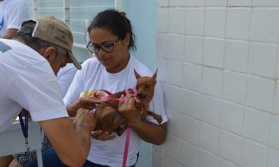 FMS inicia vacinação de cães e gatos neste sábado