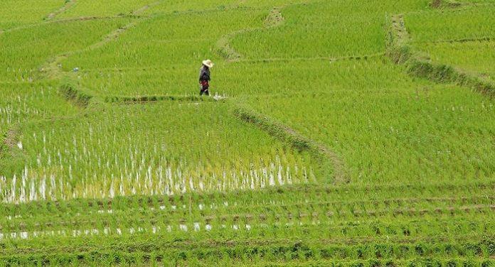 Gobierno inyectó más de 767 millones de pesos a la agropecuaria en seis meses en el Sur
