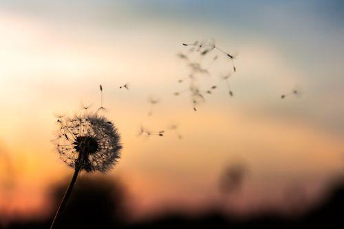5 lecciones de vida que nos regala el COVID- 19