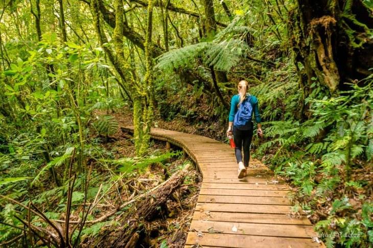 Debes conocer todo el ecosistema que posee el Parque Nacional La ...