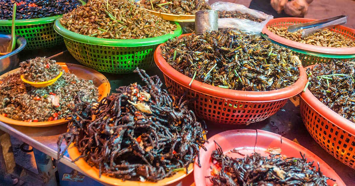 Los insectos, una nueva fuente de proteínas seguras, saludables y sostenibles