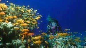 fondo-marino-en-la-herradura
