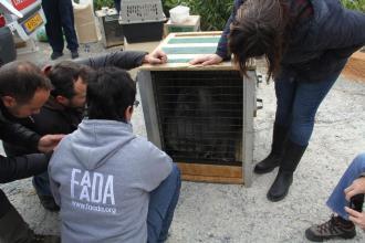 TECNICOS DE FAADA SUPERVISARON TRASPORTE ANIMALES DE PEÑA ESCRITA ALMUÑECAR 17