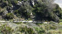 SENDERISTAS POR CAMINO PESCADORES CAMINO DEL FARO PUNTA DE LA MONA 17 (1)