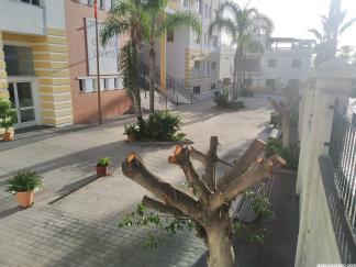 PODA CENTRO CIVICO LA HERRADURA 3 20
