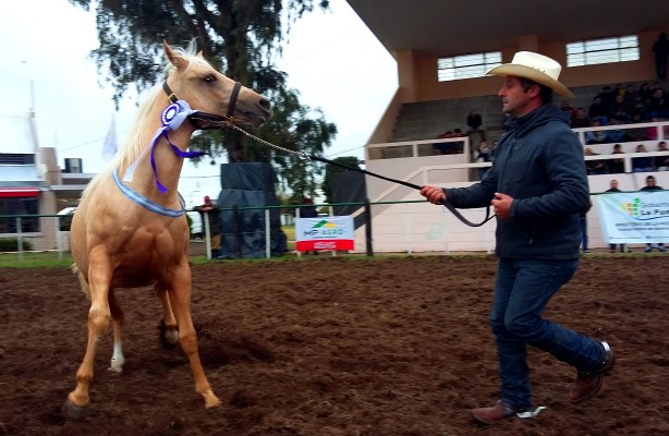 Se suspendió la Expo Caballo de Santa Rosa por el brote de influenza equina