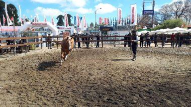 caballo expo 11