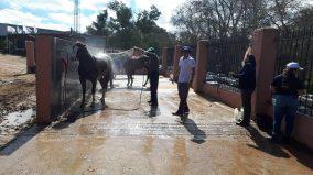 caballo expo 3