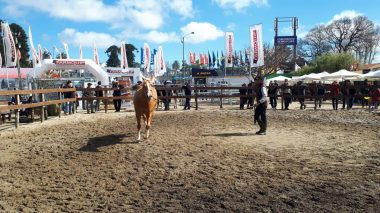 caballo expo 9