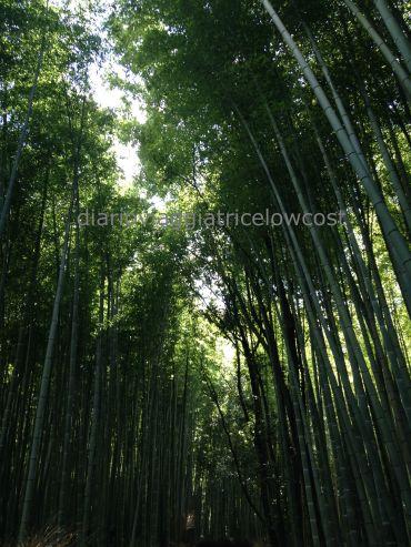 foresta bambu arashiyama