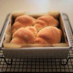 ぎゅーぎゅー塩バターあんロール、被写体と試作と。