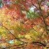 嵐山渓谷と小川町下里分校(秋の写真さんぽ)