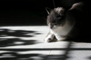 Jack in sunlight