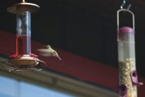 Hummingbird at the feeder