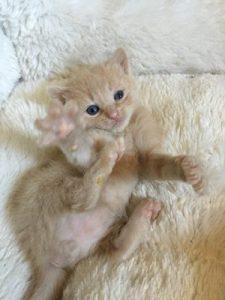 Tyke - foster kitten