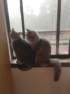 Skeeter and Petticoat don't want to go out on a rainy summer morning