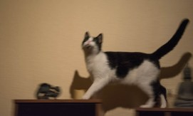 A moth hunting cat 2
