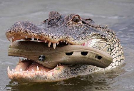 Il perd son travail à cause du Covid-19 et meurt entre les dents d'un crocodile