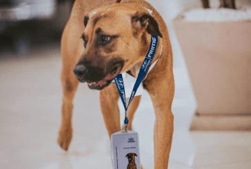 Ce chien finit par être embauché dans une concession automobile après être venu tous les jours - photos