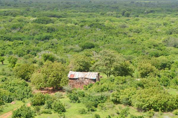 An aerial view of Boni Forest in Lamu County where Al-Shabaab militants have been hiding. Security forces conducting the Linda Boni operation have discovered and destroyed three hideouts belonging to the militants. FILE PHOTO   KEVIN ODIT   NATION MEDIA GROUP