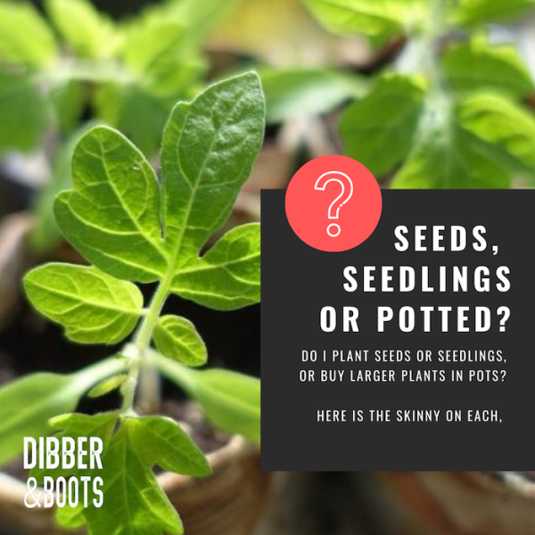 planting seeds, seedlings or potted