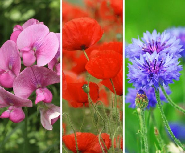 attract pollinators with flowers