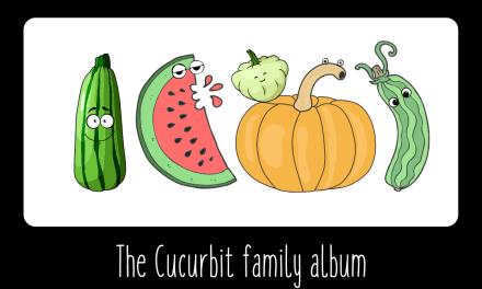 The Cucurbits