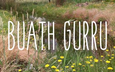 Buath Gurru – grass flowering season