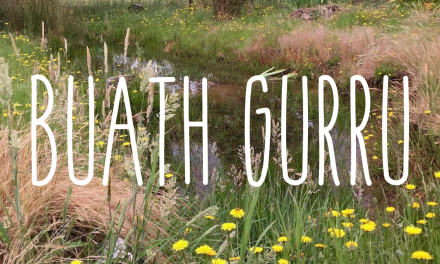 Buath Gurru – grass flowering season