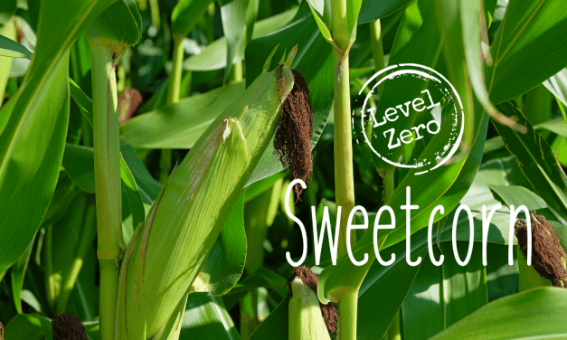 level zero sweetcorn