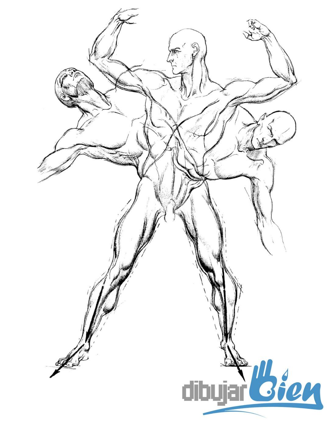 Libros para dibujar anatomía: Burne Hogarth
