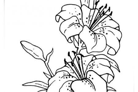 Imagenes De Flores Bonitas Para Dibujar A Color Find Gallery