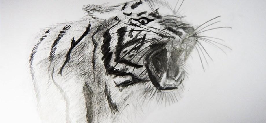 Dibujos Realistas A Lapiz De Animales