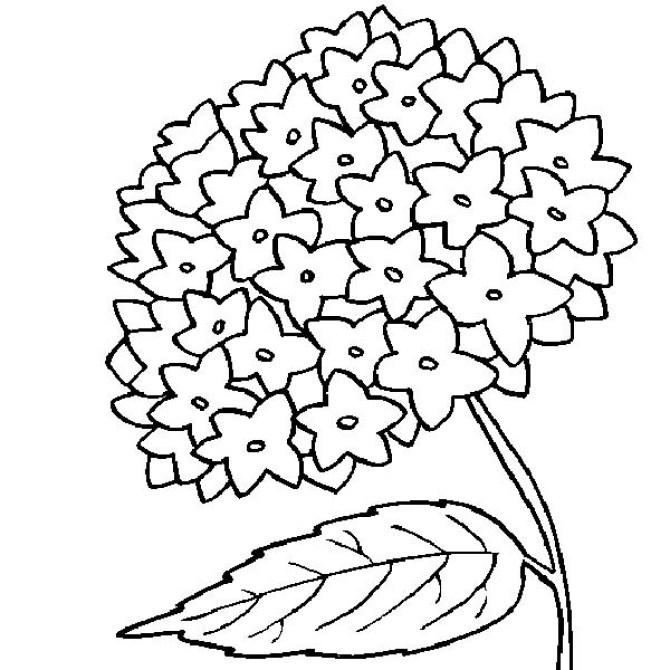 Dibujos de ramos de flores para pintar