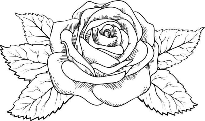 Dibujos de rosas para imprimir y pintar
